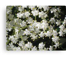 Tiny fleurs Canvas Print
