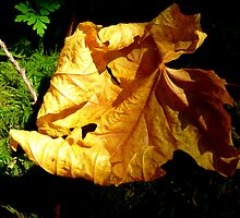 The First Signs of Fall  by Elaine Bawden