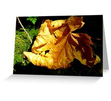 The First Signs of Fall  Greeting Card