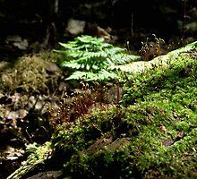 Blooming Moss by SophiaDeLuna