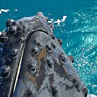 Humpback Whale Spy Hop   by Barbara Burkhardt