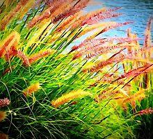 Flowers by newimagedepot