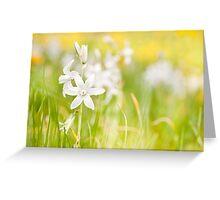 White Ornithogalum nutans flowers Greeting Card