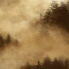 Misty Forest by SophiaDeLuna