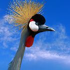 East African Crowned Crane by 2HivelysArt