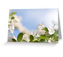 Flowering Cerasus cherry tree Greeting Card
