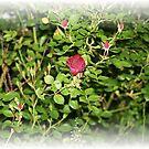 Buds everywhere by fotoflossy