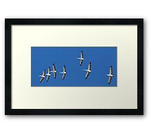(not quite) Sequential Pelicans Framed Print