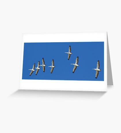 (not quite) Sequential Pelicans Greeting Card