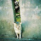 Cat by Gamal  Istiyanto