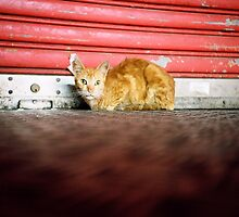 Cat by Gamal  Istiyanto