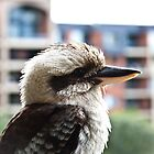 Kookaburra by John Anderson