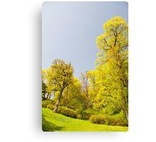 Green spring trees vibrant nature Canvas Print