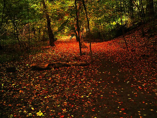 Carpet Of Leaves by Marie Van Schie