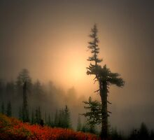 Standing Tall by Charles & Patricia   Harkins ~ Picture Oregon
