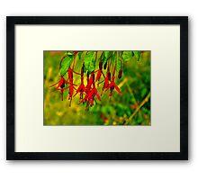 Fuchsia   #2 Framed Print