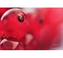 Delicious Red Berries... Photographic Print