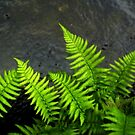 Frolicking Ferns by Kat Simmons