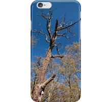 Old dead trunk decayed tree iPhone Case/Skin
