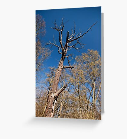 Old dead trunk decayed tree Greeting Card