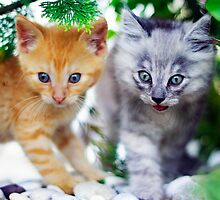 Best friends by Matic Golob