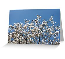 White Magnolia blossoms bunch Greeting Card