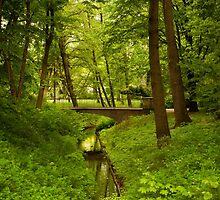 Green spring walk in park by Arletta Cwalina