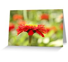 Red cap sideview Greeting Card