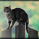 Fence kitty by AngieBanta