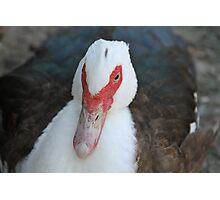 Fowl Duck  Photographic Print