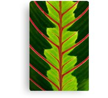 Green leaf with red veins  Canvas Print