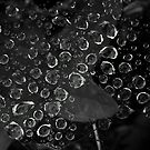 Tears of nature... II by LadyPixbo