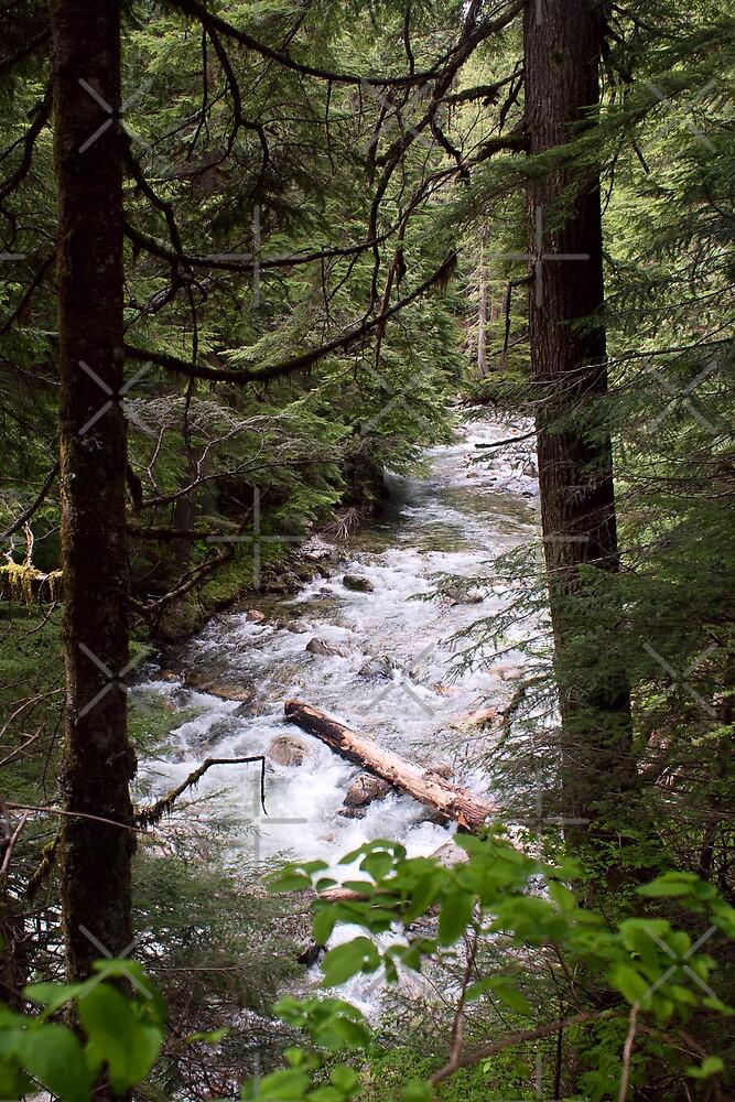 Denny Creek, Washington by Stacey Lynn Payne