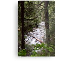 Denny Creek, Washington Metal Print