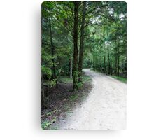 Thru the Florida Woods Canvas Print