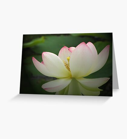 Lotos in light Greeting Card
