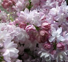 Fresh Lilacs by MarianBendeth