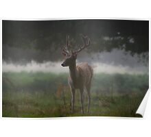 Misty morning in Richmond Park in London Poster