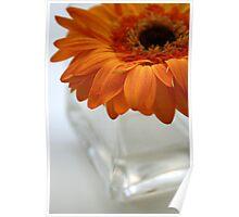 Gerbera in vase Poster