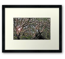 nature's plan Framed Print