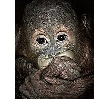 Orang Utan Baby Portrait Photographic Print