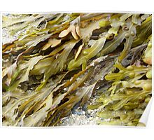 Seaweed.......pure and simple. Poster