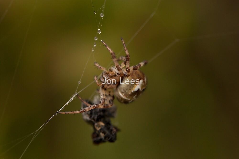Garden Spider by Jon Lees