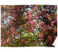Azalea bush in Macro Poster
