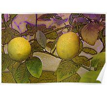 Result of my lemon tree Poster