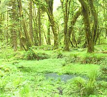 Old Growth forest in Washington State by tgarden