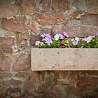 petunia flowers on a stone wall in a pot of stone by Valerii Kotulskyi