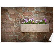 petunia flowers on a stone wall in a pot of stone Poster