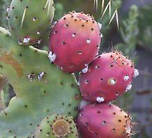 Cactus Study #2 by heatherfriedman