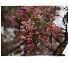 Flower bush in Macro Poster